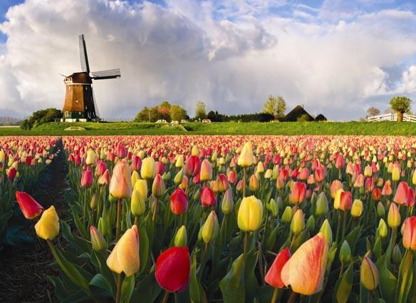 Ипотечный долг Голландии продолжает расти