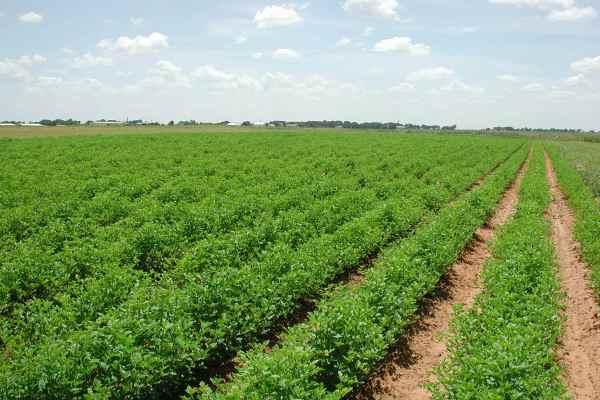 Где взять кредит на сельское хозяйство?