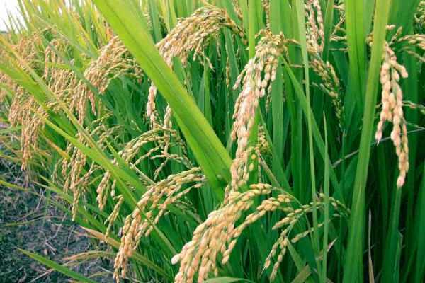 Что такое сельскохозяйственный кредит?