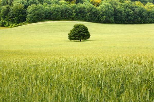 Кредит залог земли украина