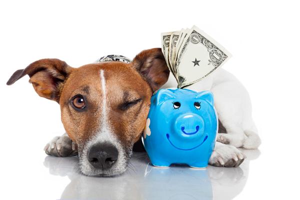 Цели кредита – обычные и экзотические