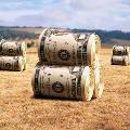 Сельское хозяйство получит больше льготных кредитов