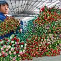 Кредитование цветочного бизнеса эксперты назвали главной составляющей его стабильности